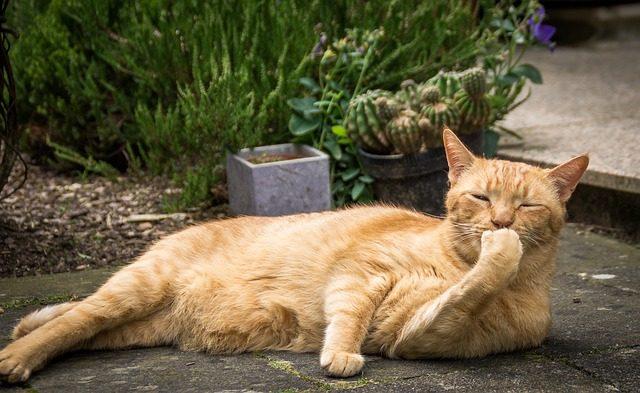Katzen als Freigänger