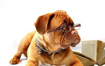 Hundeführschein