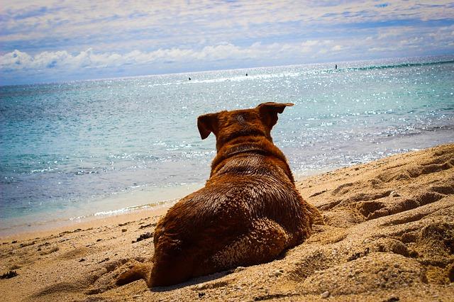 Mit dem Hund gut über den Sommer kommen