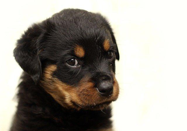 Information für Hunde – und Katzen – Welpen – Besitzer